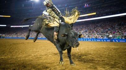 Houston Rodeo 2021